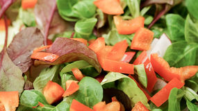 Salad with radish and paprika Royalty Free Stock Photos