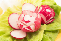 Salad of radishes and lettuce.  Stock Photography