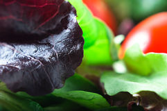 Salad - Red Lettuce Macro Stock Photos