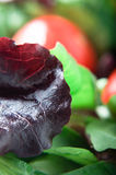 Salad - Red Lettuce Macro Royalty Free Stock Images