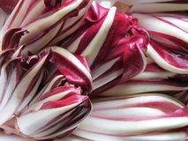 Salad red radicchio of Treviso. Background Stock Photography
