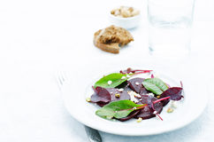 Salad with roasted beets, goat cheese, mangold and pistachios Stock Photos