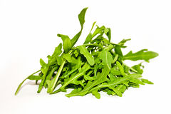 Salad rocket. Rucola. Eruca sativa. Royalty Free Stock Images