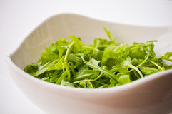 Salad Rocket / Rucola. Salad Rocket or Rucola in a white bowl Royalty Free Stock Photography
