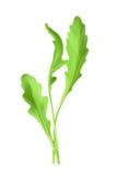 Salad rocket vector illustration Stock Image