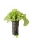 Salad roll alga isolated on white background Stock Photos