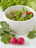 Salad from salad and  garden radish Stock Images