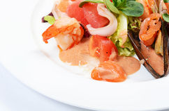 Salad from seafood and a salmon Royalty Free Stock Images