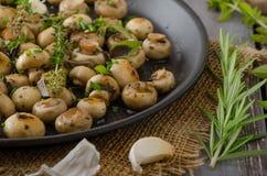 Salad of small mushrooms and herbs Stock Photos