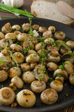 Salad of small mushrooms and herbs Stock Photography