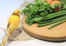 Salad sorrel Royalty Free Stock Image