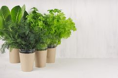 Salad, spinach, dill, parsley in craft pots on white wood shelf, copy space. Healthy food. Salad, spinach, dill, parsley in craft pots on white wood shelf, copy Stock Photo
