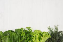 Salad, spinach, dill, parsley sheaves on white wood plank, top view, decorative border. Salad, spinach, dill, parsley sheaves on white wood plank, top view Stock Images
