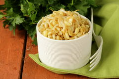 Salad of sprouted mung beans Stock Image