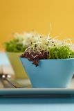 Salad with sprouts Stock Images