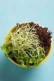 Salad with sprouts Stock Photography