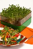 Salad with sprouts Royalty Free Stock Image