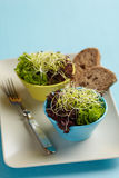 Salad with sprouts in bowl, with bread on the side Royalty Free Stock Photos