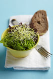 Salad with sprouts in bowl, with bread on the side Royalty Free Stock Photo