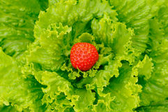 Salad and strawberry. Nature background Stock Photography