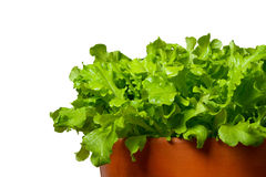 Salad in terracotta bowl Stock Image