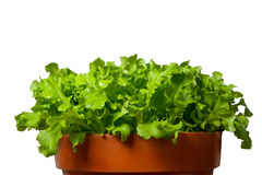 Salad in terracotta bowl Royalty Free Stock Photography