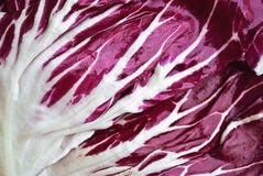 Salad texture (chicory) Stock Image
