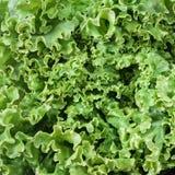 Salad - texture Royalty Free Stock Image