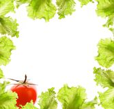 Salad and tomato border Stock Image