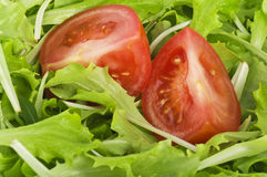 Salad and tomatoes Stock Photography