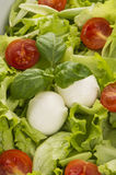 Salad with tomatoes and mozzarella Royalty Free Stock Photos