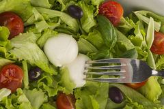 Salad with tomatoes, mozzarella and black olive. And fork Royalty Free Stock Images