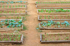 Salad and vegetable cultivation Stock Photo