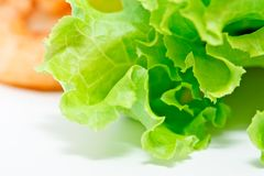 Salad vegetable, Lattuce. Stock Photo