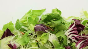 Salad vegetable tracking pack stock video footage