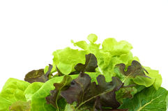 Salad vegetarian on white background Royalty Free Stock Images