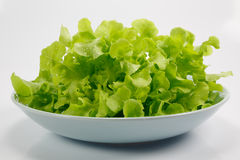 Salad on white background. Salad vegetables on white background Stock Photo