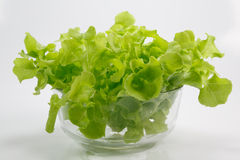 Salad on white background. Salad vegetables on white background Royalty Free Stock Images
