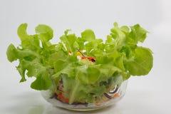 Salad on white background. Salad vegetables on white background stock image