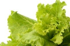 Salad. On white isolated background Stock Photos
