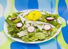 Salad With Yellow Flower Stock Photography