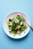 Salad with young radish on plate Royalty Free Stock Photography
