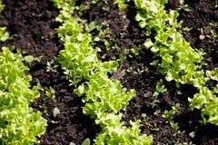 Salada. imagens de stock