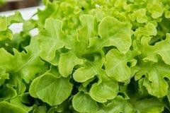 Salada Foto de Stock