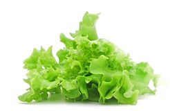 Salada da alface fotos de stock