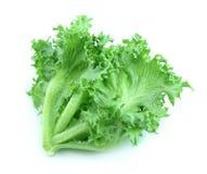 Salada da alface Imagens de Stock Royalty Free