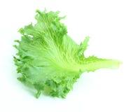 Salada da alface Fotografia de Stock Royalty Free