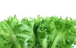 Salada da alface Imagens de Stock
