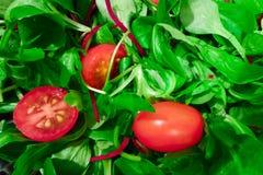 Salada da alface com tomates Foto de Stock