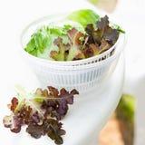 Salada da alface no girador Fotos de Stock Royalty Free